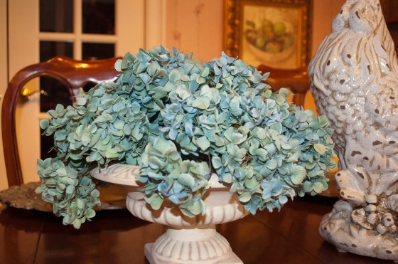 Hydrangeas dryed