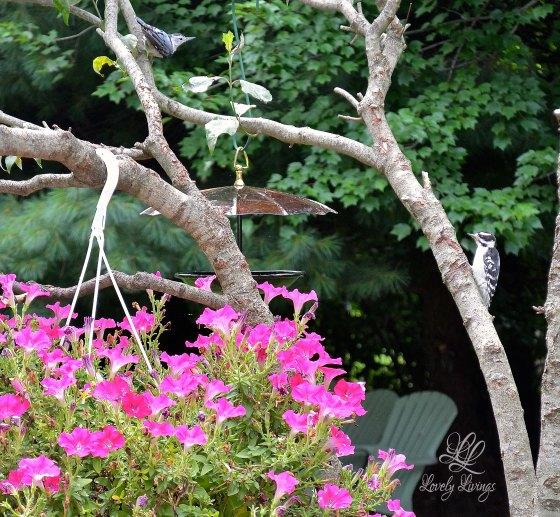 Lovely Umbrella Bird Feeders