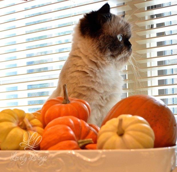 Autumn Kitty.