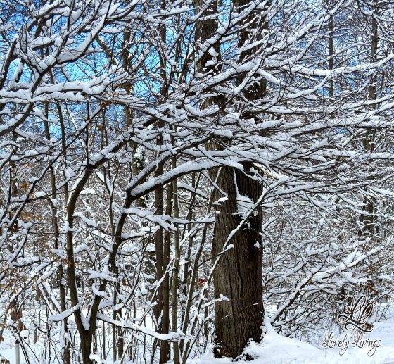 Wonderful Winter Day
